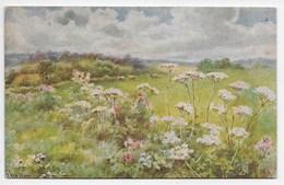 S. Shelton Fragrant Meadow - Tuck OIlette 9613 - Autres Illustrateurs