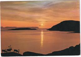 Midnight Sun At Hammersfest  - (Norge/Norway) - Reindeer - Noorwegen