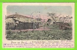 PINAR DEL RIO - EN UNA VEGA DE TABACO - Tarjeta Escrita En  1903 -  Fotos Anverso Y Reverso - Cuba