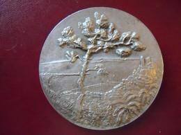 Ancienne Grande Médaille De Table Bronze Ville De CANNES. - Touristiques
