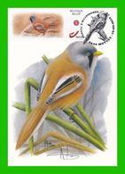 BUZIN - Panure à Moustaches Ou Mésange à Moustaches - CM Mettet 16-03-2019 - 1985-.. Birds (Buzin)