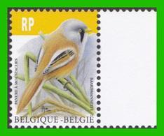 BUZIN - Panure à Moustaches Ou Mésange à Moustaches - 1985-.. Oiseaux (Buzin)