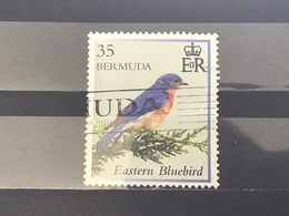 Bermuda - Vogels (35) 2014 - Bermuda