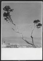 PANORAMA - FORMATO 14,50X10,50 - ORIGINALE D'EPOCA FINE ANNI '40 - Foto