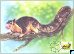 Sri Lanka Stamps 2018, Squirrels, Squirrel, Animal Definitive, Maxicard, Maxicards - Sri Lanka (Ceylon) (1948-...)