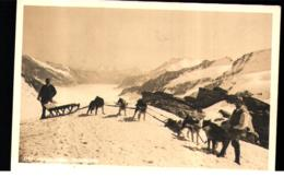 Polarhunde Jungfrau - Sports D'hiver