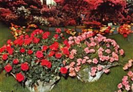 Gentse Floraliën - Gent - Gent