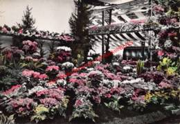 Gentse Floraliën 1950 - Gent - Gent