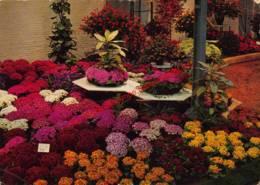 Gentse Floraliën 1970 - Gent - Gent