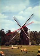Houten Achtkantige Bovenkruier Uit Schulen - Provinciedomein Bokrijk Openluchtmuseum - Genk - Genk