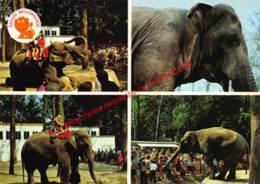 Safari Bellewaerde - Zillebeke - Olifant - Ieper - Ieper