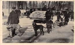 10808 - Canada - Dog Derby - Montreal - Canada