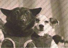 "[2017, Space, Dogs, Animals] Postcard ""[Space Dog Chernushka And Zvezdochka]"". - Russie"