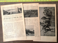 ENV 1900 UN ELEVAGE AU FOND DES MERS RUCHERS ELEVAGE DES HUITRES ARCACHON PHOTOS DE DA CUNHA - Vieux Papiers
