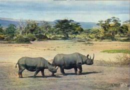 Afrique Africa Fauna Rhinocéros - Rhinocéros