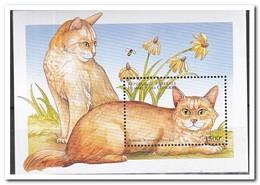 Comoren 1998, Postfris MNH, Cats - Comoren (1975-...)