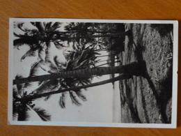 D2 - Mayotte (Iles Comores) Kongo - Rivage Mayottais - Cliche R. Legrand - 1959 - Comores