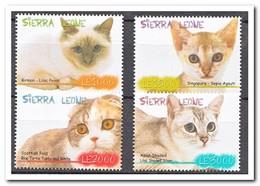 Sierra Leone 2009, Postfris MNH, Cats - Sierra Leone (1961-...)