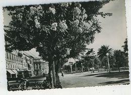 LIVORNO VIALE ITALIA FG VG 1955 - Livorno