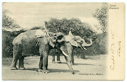 INDIAN ELEPHANTS / POSTMARK - COLOMBO, CEYLON SIX CENTS / ADDRESS - SYDNEY - ENMORE, BURLEIGH - Elephants