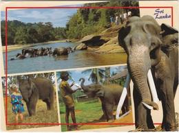1483 SRI LANKA - ELEPHANT ORPHANAGE - PINNAWALA - Sri Lanka (Ceylon)