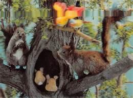 Carte En Relief - Squirrel And Bird - Ecureuils Et Oiseaux - A Systèmes