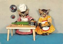 Chats Habillés - Patissiers - Animali Abbigliati