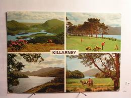 Killarney - Vues Diverses - Irlande