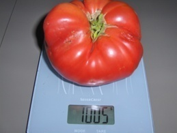 30 Graines Tomates RUSSE BIO - 2. Seeds