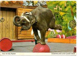 Elephant Marineland Canada Olifant Elefant - Éléphants