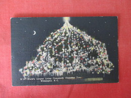 Night View  World's Largest Living Community Christmas Tree  Wilmington North Carolina >ref 3223 - Wilmington