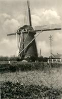 Rockanje, Korenmolen, Windmill, Real Photo - Windmolens