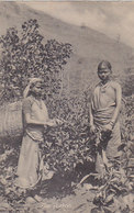 Tea Plukers   (190315) - Sri Lanka (Ceylon)