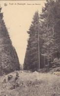 Foret De Nassogne, Chemin Des Reumont (pk57219) - Nassogne