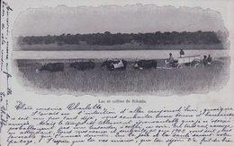 Mozambique, Lac Et Colline De Rikatla, Attelage De Boeufs (2.1.1902) - Mozambique