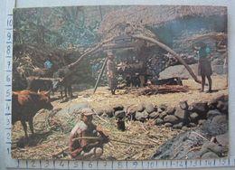 Cabo Verde - Stº. Antão  - Moendo A Cana Do Açucar No Trapiche - SP1651 - Cap Vert