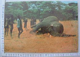 Angola - Dança De Alegria Pelo Abate Do Elefante - SP1654 - Angola