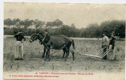 40 - LANDES - Travaux Dans Les Champs, Binage Du Maïs - Cheval - - Autres Communes