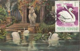 BIRDS, WHITE SWAN, CM,MAXICARD, CARTES MAXIMUM, 1977, ROMANIA - Cygnes