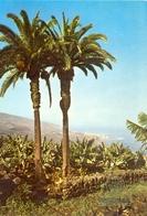 Canaries - Tenerife - Puerto De La Cruz - Palmeras - Fisa - IBERIA - 6340 - Madrid