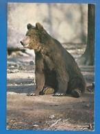 ANIMAUX -  72 - LE BREIL-SUR-MERIZE - PARC ANIMALIER - OURS BRUN D'EUROPE - DOMAINE DE PESCHERAY - Ours