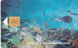 Saba - Satel - Marine Life - Antille (Olandesi)