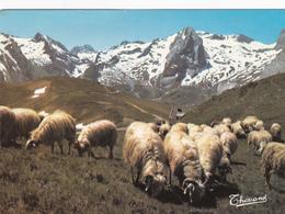 CPM FRANCE Moutons Au Col D'Aubisque Pyrénées - Frankreich