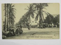 C. P. A. : Sénégal : SAINT-LOUIS : Repos De La Caravane, Chameaux, Animé - Sénégal