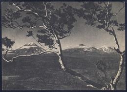 5-20 RUSSIA 1957 POSTCARD SH04748 Mint KAMCHATKA Far East PANORAMA MOUNTAIN MONTAGNE TREE BAUM ARBRE NATURE NATUR USSR - Russie