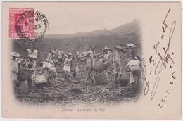 Colombo - La Récolte Du Thé - Sri Lanka (Ceylon)