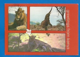 ANIMAUX - KENIA -  LION - ELEPHANT TROMPÉTANT...- LEOPARD - Lions