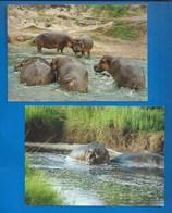 ANIMAUX - HIPPOPOTAMES - LOT DE 2 CARTES - EAST AFRICA - RESERVE DE LA RUSIZI - Hippopotames
