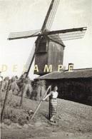 OKEGEM - Ninove (O.Vl.) - Molen/moulin - De Verdwenen Phenixmolen (in 1840 Overgebracht Uit Aalst) - Ninove
