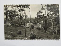 C.P.A. : Guinée : GUINEE SEREDOU : Les Plantations De Quinquina - Guinée Française